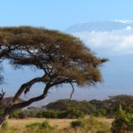 Vystupte letos na Kilimanjaro!