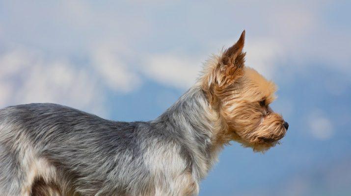 Češi jakožto vášniví chovatelé psů. Jaká plemena si u nás nejčastěji pořizujeme?